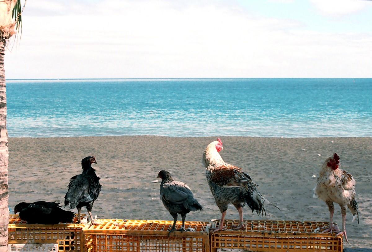 4-birds-one-beach-b40dc7763b1c3ab0d2bf3bca6d5e35dd